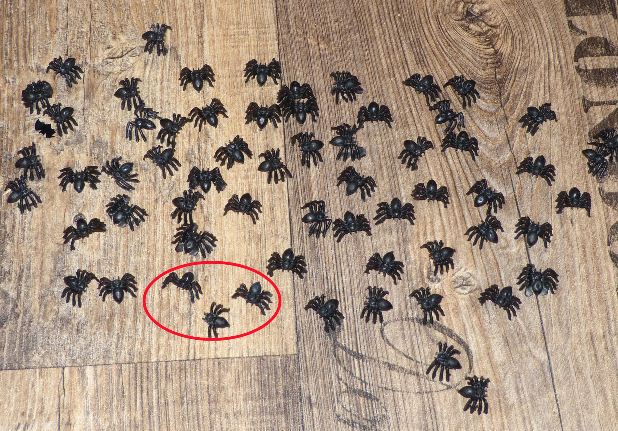 Spinnen-Rätsel