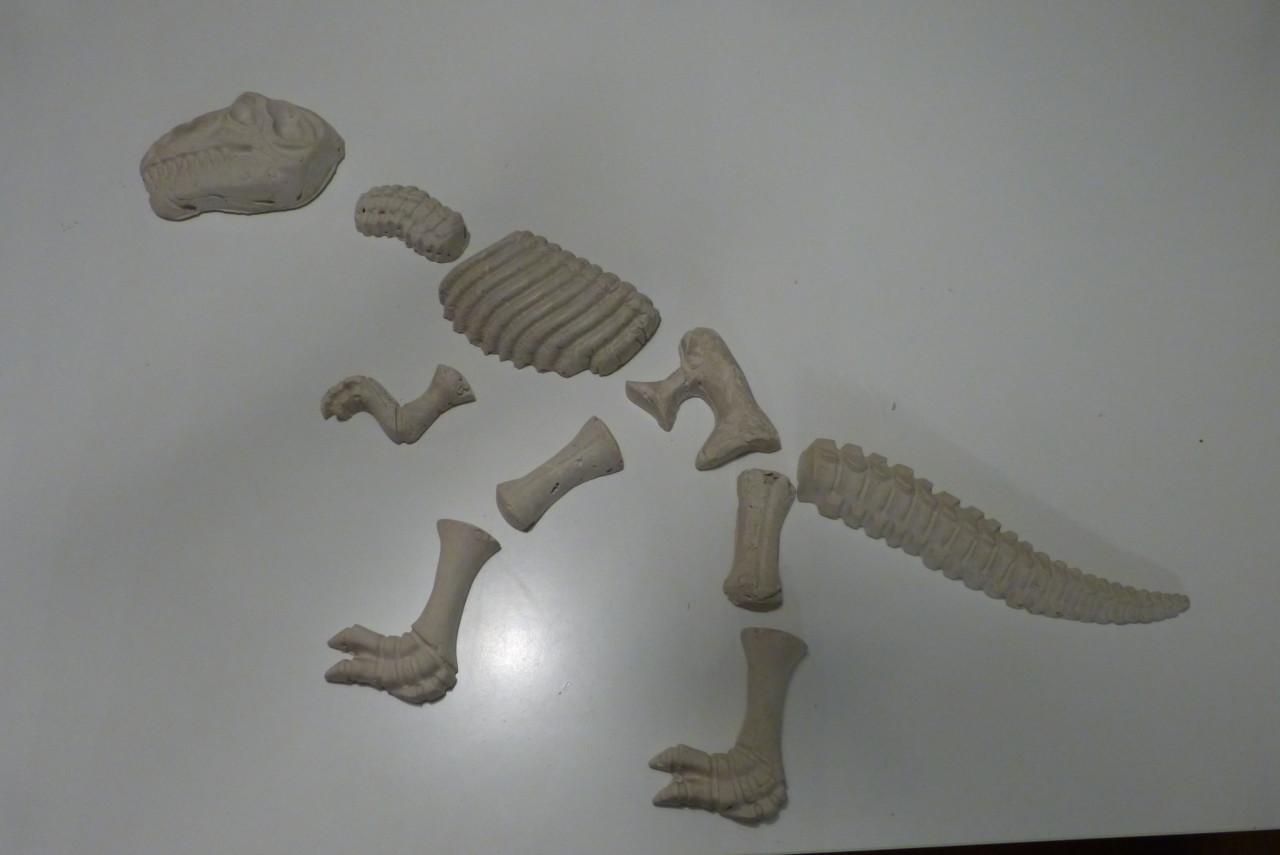Dino-Skelett gießen